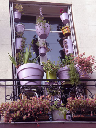 WINDOW-BOX-1