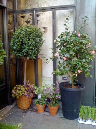 FLOWERS-RUE-RICHELIEU-4