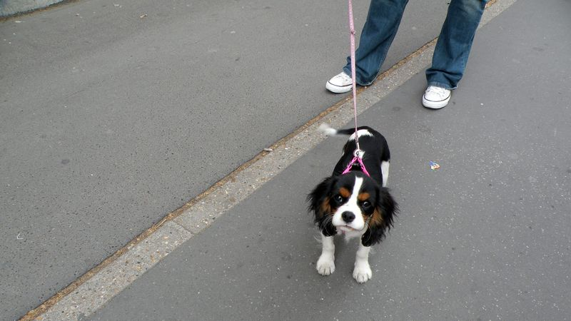 PARIS-POOCHES-12