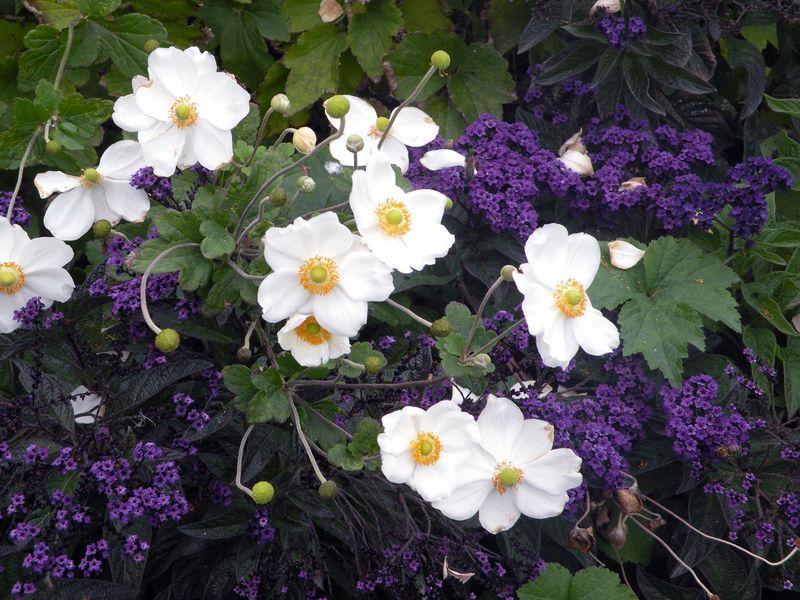 PR-FLOWER-6