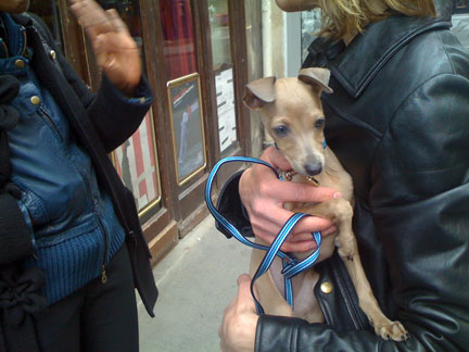 PARIS-POOCHES-8