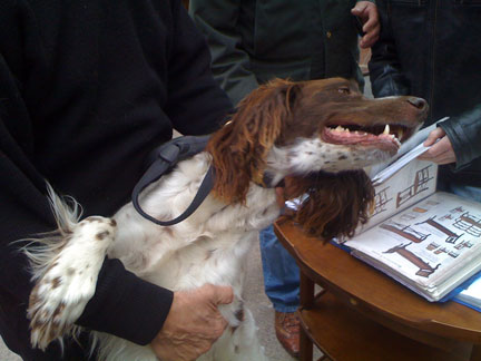PARIS-POOCHES-10