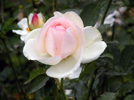 PR-FLOWER-3