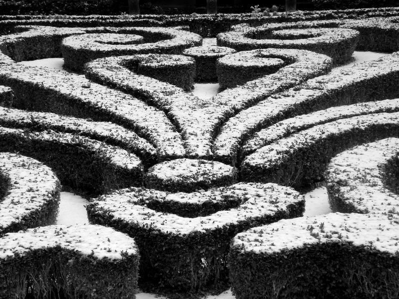 Snow covered hedges at Carnavalet