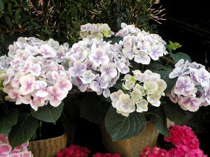 SPRING-FLOWERS-9
