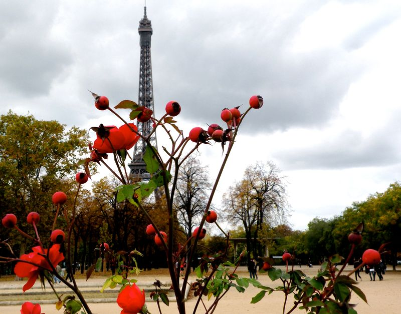 Red Roses at Eiffel Tower