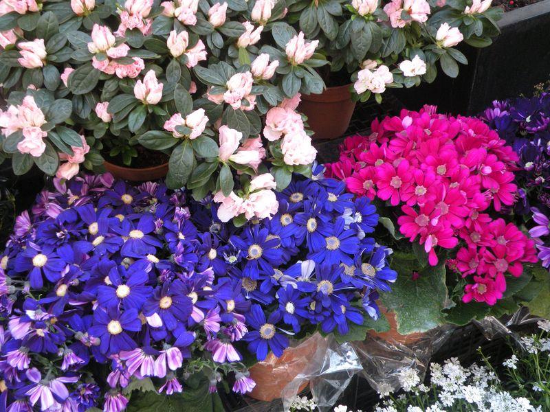 SPRING-FLOWERS-6