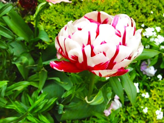 FLOWERS CARNAVALET-1