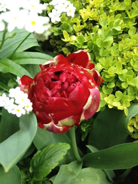 FLOWERS CARNAVALET-5