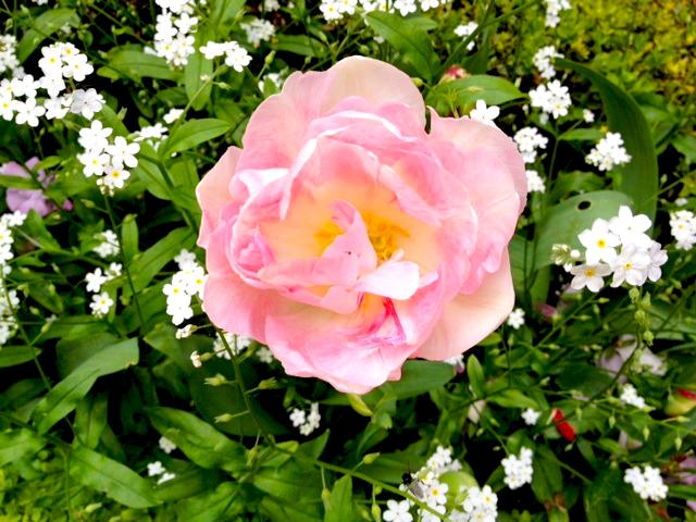 FLOWERS CARNAVALET-10