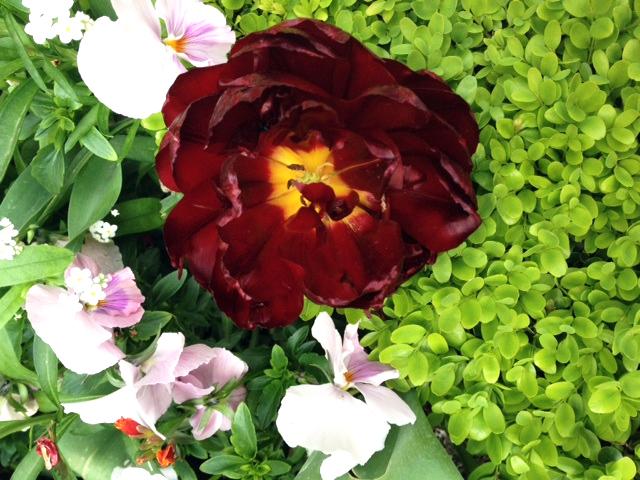 FLOWERS CARNAVALET-3