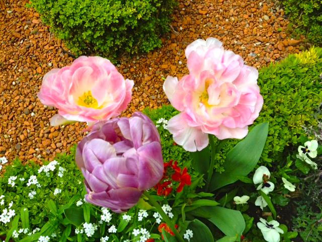 FLOWERS CARNAVALET-6