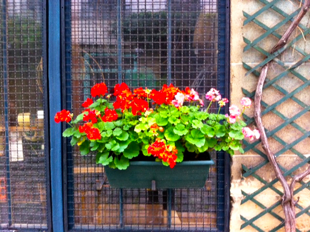 WINDOWBOXES13-10